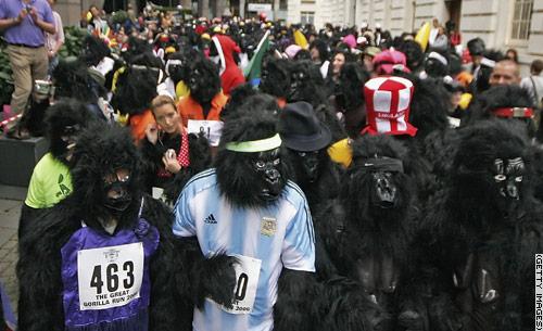 gorillarace[1]